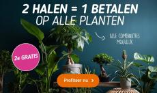 1+1 Gratis en Extra korting tot 78% Korting op Kamerplanten bij Koopjedeal