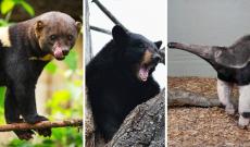 38% korting op Zie-ZOO dierenpark Brabant voor €7,50 p.p. bij Actievandedag