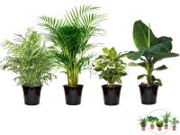 Tot 63% Korting 4 Perfect Plant Exotische Kamerplanten of 5 Luchtzuiverende Kamerplanten bij iBOOD