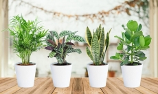 63% Korting 4 kamerplanten voor €22,49 bij Groupon