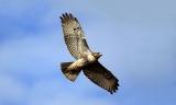 74% Korting Workshop in Settels Roofvogels Amersfoort voor 32,49 p.p bij Groupon