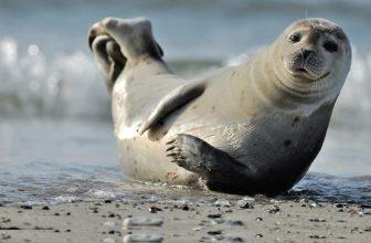 46% Korting Entreeticket Zeehondensafari Natuurreservaat Oosterschelde van 3 uur voor €12,95 bij Actievandedag