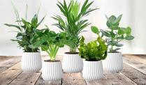 58% Korting Set van 5 Luchtzuiverende Planten voor €24,95 bij Actievandedag