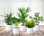 58% Korting Set van 5 Luchtzuiverende Planten voor €24,95 bij Voordeelvanger