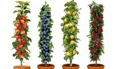 Tot 64% Korting Set van 4 of 8 zuilfruitbomen met kers, peer, appel en pruim voor vanaf €29,99 bij Groupon