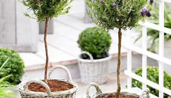 Tot 66% Korting op 22 soorten tuinplanten bij iBOOD