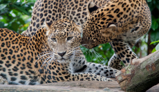31% Korting Toegangskaart Burgers Zoo voor €16,50 bij Tripper