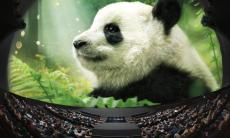 36% Korting Grootbeeldfilmtheater Omniversum voor €7,99 p.p. bij Groupon
