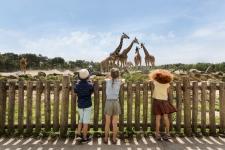 50% Korting op 2 tickets Safaripark Beekse Bergen bij besteding €20 bij GroupDeal
