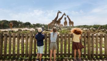 30% Korting Safaripark Beekse Bergen voor €18 bij AD Webwinkel